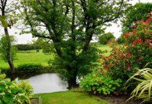 Photo of Kako zaštiti biljke u vrućim ljetnim danima?